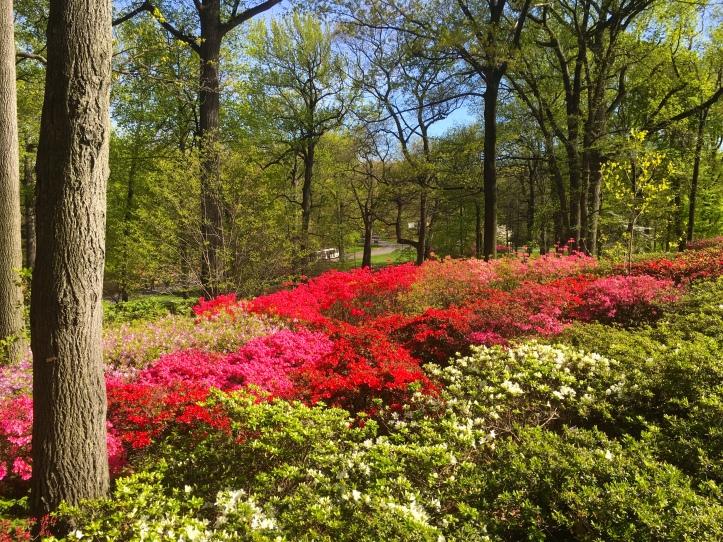 Bronx botanical