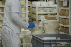 cheese factory croatia