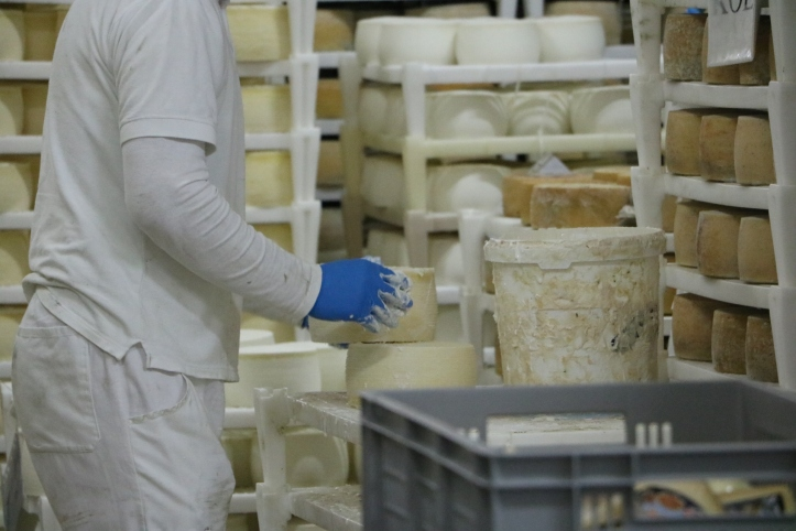 cheese factory croatia