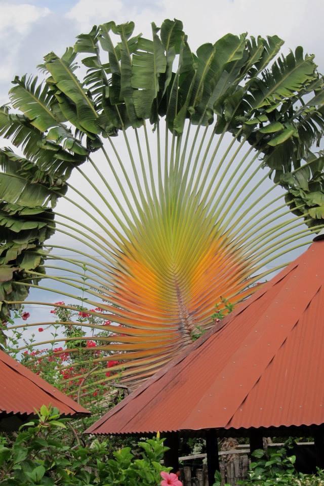 Jamaica plants
